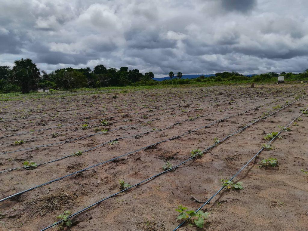 Système irrigation goutte à goutte 2