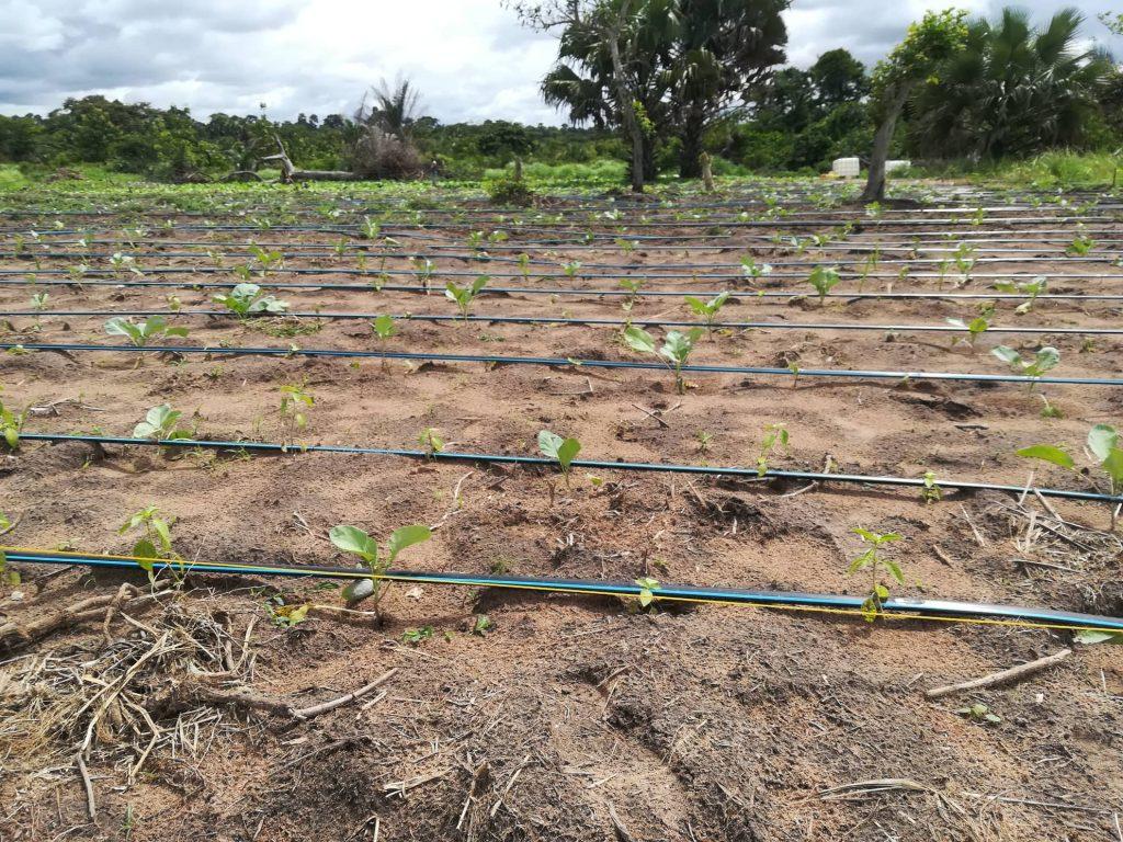 Système irrigation goutte à goutte 1